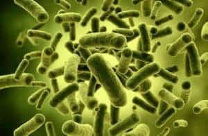 Пробиотични бактерии