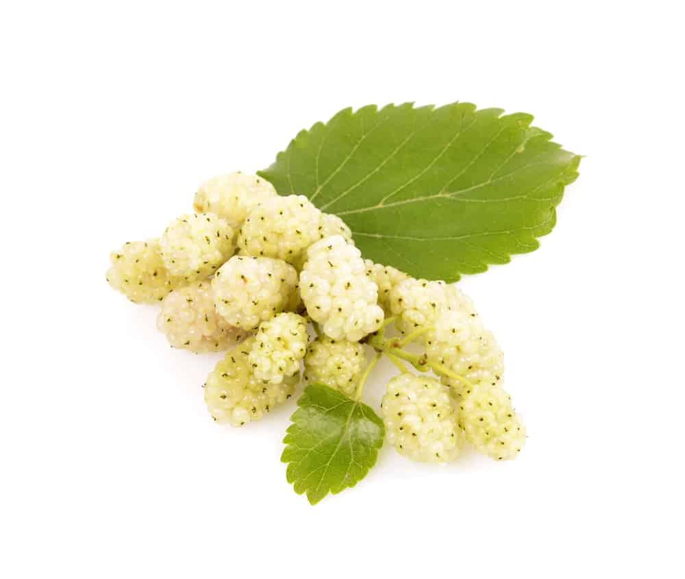 fruit du mûrier blanc