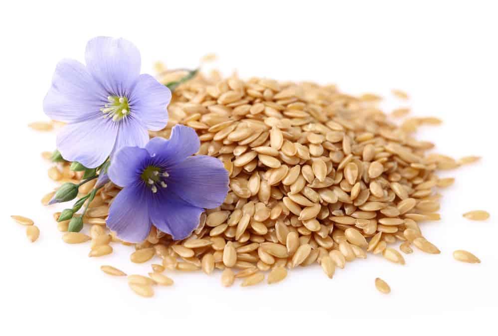 Fleurs et graines de lin