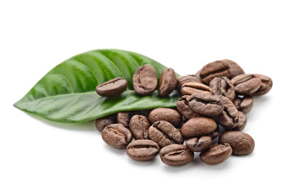 kávébab