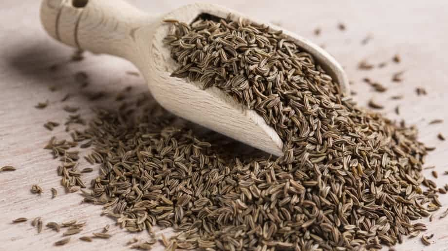 sementes de alcaravia