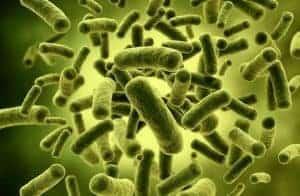 Probiotiska bakterier