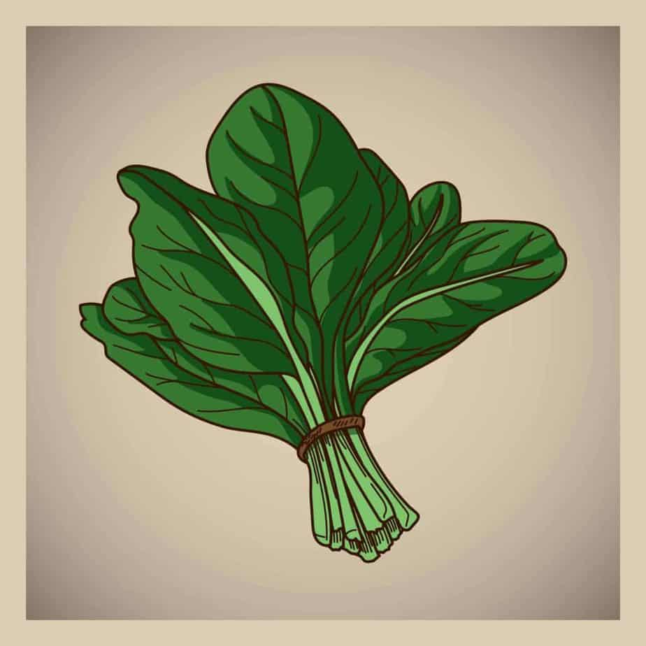 Figure of spinach leaves