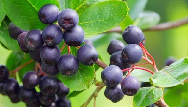 bilberry acai
