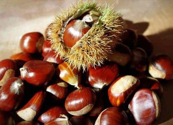 chestnut fruit
