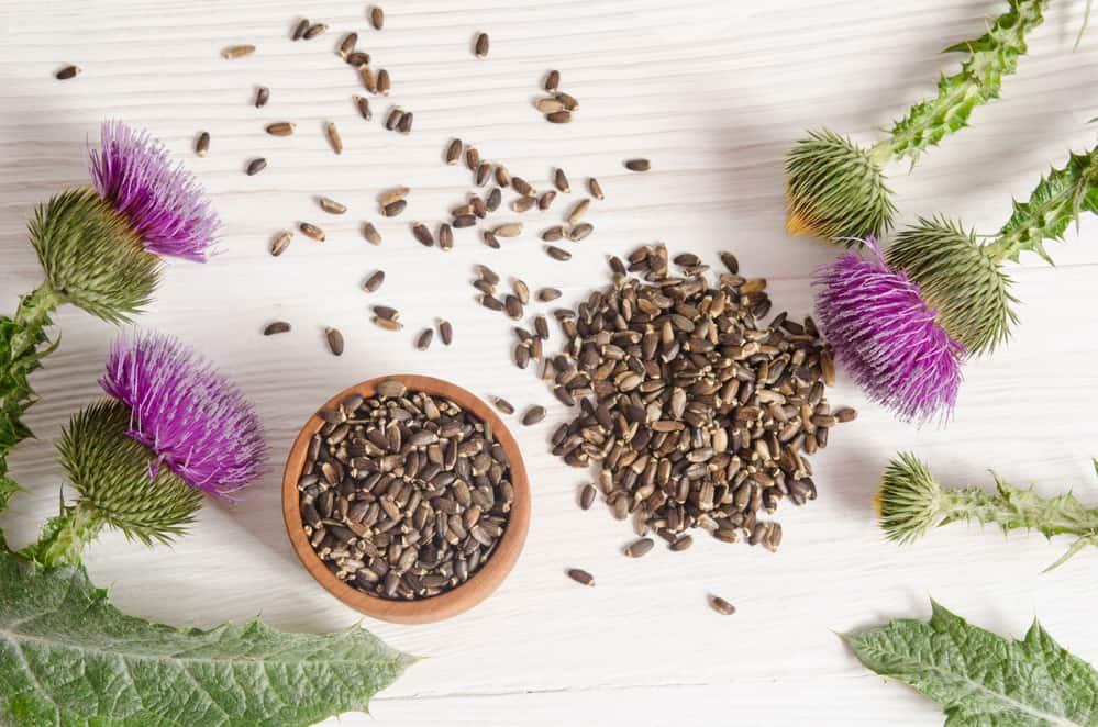 Thistle grains